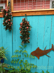 """Two simple hanging bags of begonias are striking against the blue wall in Lucinda Hutson's """"Mermaid Garden"""""""