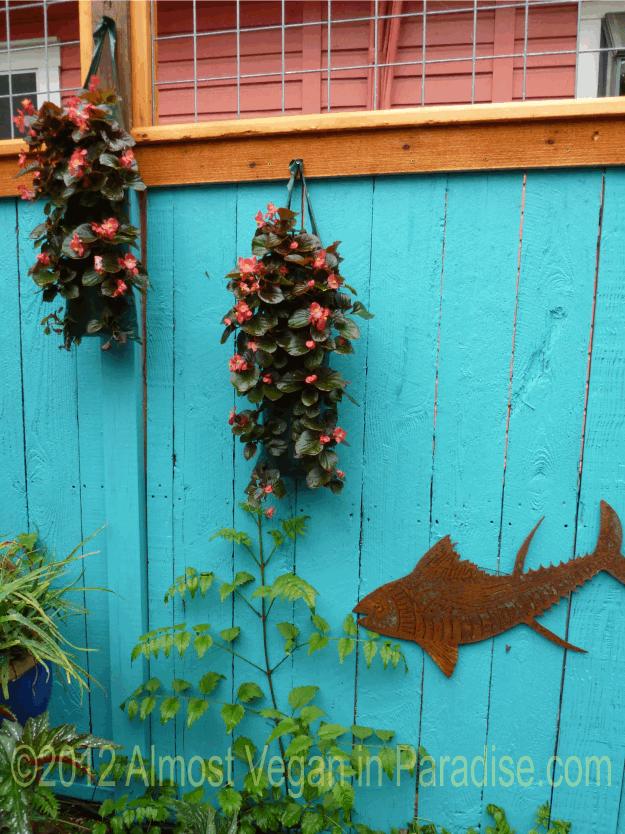 begonias at lucinda hutsons garden