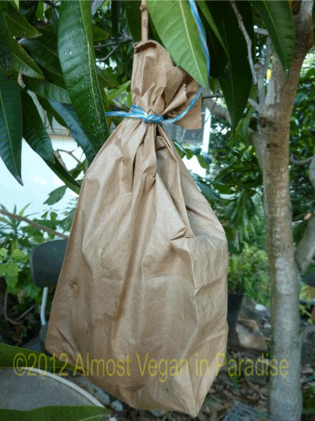 mango bagged